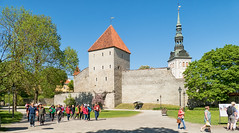 Tallinn city wall, Estonia (Gösta Knochenhauer) Tags: 2018 may tallinn estonia capital panasonic lumix fz1000 dmcfz1000 old town vanalinn unesco world heritage site city p9150540 nik wall p9150540nik eesti