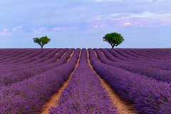 Purple Field (marypink) Tags: provenza provence france francia lavanda lavander valensole field campo fioritura summer estate sky cielo nikond800 nikkor70200f28