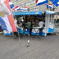 Customers of the fish stall (Michiel2005) Tags: customers fish stall viskraam meeuw gull zeemeeuw seagull haringkraam stationsplein stationsweg bird vogel animal dier nederland netherlands holland leiden