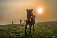 A mis pies... (Jabi Artaraz) Tags: gorbea montaña mendia potro amanecer sunset sunrise alfombra cesped hierba niebla bruma contraluz light horse silencio paz quietud verde amor yo