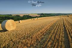 du côté de Rumengol  (Finistère,  bretagne, france) (pascalkerdraon) Tags: france bretagne brittany finistere penn pen ar bed landscape paysage moisson sunset rumengol