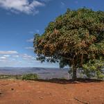 The Tree thumbnail