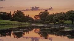 Sunset at The Botanical Japanese Garden (Jovan Jimenez) Tags: sony a6500 metabones speedbooster ultra vivitar series 1 3585mm fuji superior 200 lut sunset botanical japanese garden chicago nature timelapes video ilce alpha 16x9 widescreen 6500