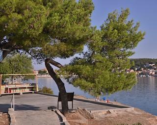 Croatie, l'arbre tordu