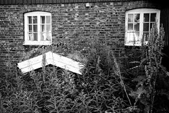 Ved fjøsveggen (estenvik) Tags: 2018 coast erikstenvik estenvik juli july kyst namdal namdalen norge norway sommer summer trøndelag ytre blackandwhite grayscale monochrome house abandoned barn