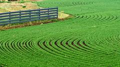Feeling Groovy - Western North Dakota (j-rye) Tags: crops soil fence northdakota curves sonyalpha sonya6000 sony a6000 ilce6000 mirrorless