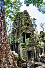 Green Lichen Covering Parts of Ta Prohm Temple, Cambodia-28a (Yasu Torigoe) Tags: sony a99ii a99m2 sonyilca99m2 siemreap siem reap angkor archeological archeology park history ancient architecture temple religion religious buddhism buddhist buddha historical ta prohm taprohm jungle trees tree tombraider banyan tomb crypt laracroft lara croft suryavarman vishnu stonework buildings surreal sculpture structure deityroots landscape overgrown vines art theravada photograph photography dynamic travel asia cambodia southeast deity ruins khmer roots devatas