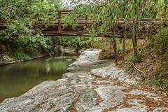 Rowlett Creek IMG_0008 (918monty) Tags: creek rowlettcreek collincountytexas breckinridgeparkricharsontexas limestone outcropping soil foliage