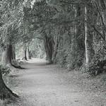 Avenue of Trees 1 thumbnail