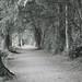 Avenue of Trees 1