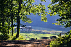 Wyatt Mountain Fence (creepingvinesimages) Tags: hff fences pasture fields farm trees green greenecounty virginia outdoors nikon d7000 pse14 topaz