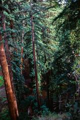 20180724-00011.jpg (tristanloper) Tags: tristanloper creativecommons film nikonf6 california bigsur pacificcoast highway1 pacificocean redwoods