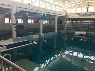 Clearwater, FL Clearwater Marine Aquarium Winter and Hope