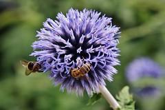 Flower (Hugo von Schreck) Tags: hugovonschreck flower blume blüte fantasticnature canoneos5dsr tamron28300mmf3563divcpzda010