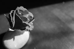 flower (Philip@Tamsui) Tags: ricoh grdigital grd grii flower 花 blackandwhite monochrome bw 黑白