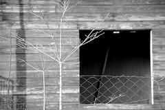 vista (mavricich) Tags: old monocromo monocromático misiones kodak nikon calle street iguazu interior fm2n tmax líneas en la foto argentina árbol madera hierba bote macrofotografía