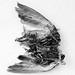 bones & feathers V