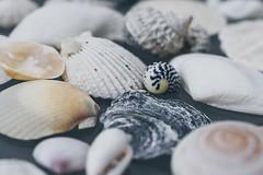 Shells🐚 (kimkullman) Tags: details micro 40mm nikon macro shells pretty beach ocean