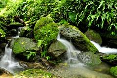 Mountain streams (mattlaiphotos) Tags: waterfall water whitewater rock forest stream creek jungle ferns plants flora botanic scenery tributary moss rivulet nature