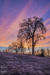 Purple Sunrise (HansenPrime) Tags: sunrise morning sun colors colorful beautiful sky clouds tree trees landscape nature pretty placerville california purple