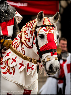 St.Georges beautiful Horse