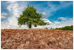 Après la moisson (Pascale_seg) Tags: landscape paysage country countryside field countryscape champ campagne moisson arbre tree agriculture été summer moselle lorraine grandest france nikon sky ciel nuages clouds