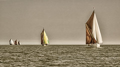 Homeward sector - Thames Sailing Barge Match 2018 (Nanooki ʕ•́ᴥ•̀ʔっ) Tags: ©suelambertlrpscpagb ironsides repertor cambria adieu niagara barge thamessailingbarge riverthames sea ocean water boat nik