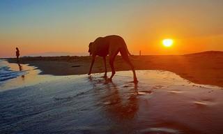That moment in photography when every element is in the right place! 😃😱 . Cet instant en photographie où chaque élément est au bon endroit !😃😱 . www.benheine.com . #beach #plage #benheinephotography #nature #dog #chien #sunset