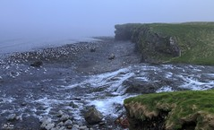 The fog by the sea (einisson) Tags: fog seagull river sea iceland snæfellsnes outdoor landscape einisson canon70d