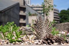 Barbican succulents (Spannarama) Tags: cactus succulents plants planting blueskies barbicanconservatory highwalk concrete brutalist architecture barbican london uk cimko28mm