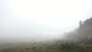 Misty morning II - Counting sheep..