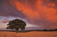 Storm Red (Captain Nikon) Tags: stormy storm sunset clouds rainbow lonetree moody crops rural derbyshire stantonbydale nikond7000