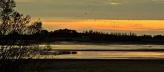 2 Retour des grues cendrées au Lac de Der Champagne (Nathery Reflets) Tags: lac nature paysage soleil marne hautemarne champagne grandest perthois lacdeder coucherdesoleil eau ciel oiseau gruecendrée grue cendrée ornithologie migration
