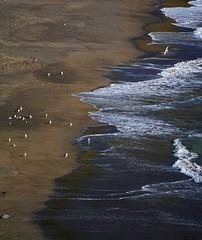 """You were born with wings, why prefer to crawl through life?"" — Rumi (Irene2727) Tags: beach water waves seagulls netarts netartsoregon oregon landscape scape pano panorama nature seaside sand"