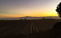 Wine Country (clear_eyed_man) Tags: salinasvalley soledad california