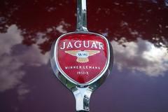 Jaguar emblem (D. C. Wilson) Tags: british england classic antique car automobile vehicle show emblem ornament text jaguar