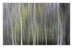 Fresh Spring Greens (After-the-Rain) Tags: spring leaves newleaves woods icm intentionalcameramovement april2018 glenwilliewood cumbria movement blurred