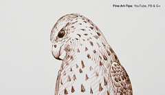 How to Draw a Falcon With Pen & Ink (Fountain Pen) - Narrated (fineart-tips) Tags: drawing art finearttips falcon fountainpen sketch tutto3 tutorial artistleonardo leonardopereznieto patreon