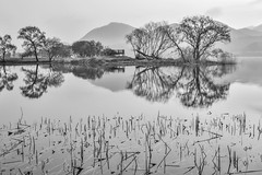 A garden of water (withcamera) Tags: watergarden river trees reflection morninglandscape 물의정원 강 나무 반영 아침풍경 nikon nikondf 24~70lens 경기도 gyeonggido southkorea