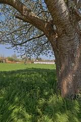 Appel à la flemmardise printanière (Tonton Gilles) Tags: hdr alençon normandie rue charles gide arbre fleurs herbe ombres paysage urbain