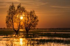 Sunset in PNUW (mirosławkról) Tags: poland nature nikonnaturephotography orange water wild trees sky sun clouds