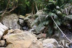 Arrow (Bob Hawley) Tags: asia taiwan lilongshan pingtung nikond7100 nikon28105mmf3545afd mountains hiking forest trees trails ropes ferns rattan