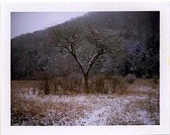 (babireley) Tags: roidweekspring2018 roidweek2018 polaroid250 fujifilmfp100c pottercountypa
