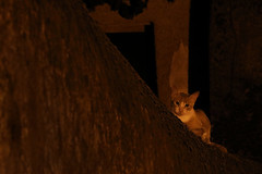La nuit tous les chats ne sont pas gris !!! / At night all cats are not gray !!!! (Phil Chapp) Tags: nuit ombres composition night shadows cat chat canon 5dmarkiv philchapp
