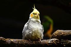 Parrot (Jurek.P) Tags: birds bird ptaki ptak papuga parrot jurekp sonya77