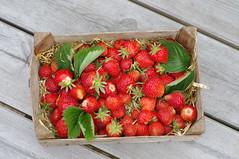 Feeling fruity.... (Blue Sky Pix) Tags: strawberries organic tasty sweet summertime feelingfruity derbyshire england pentax homegrown red berries