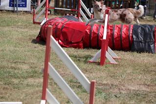 Concours d agility . 22/07/18