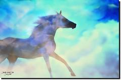 SOME DREEM (jawadn_99) Tags: explore stalion horse arab horses black white horses22 fantastic supershot scout poster photography flickr favorite art animal raising galope red vivid blue interrestigness vividimagination photoart kuwait arabian gulf