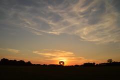 Zonsondergang Ypelo (l-vandervegt) Tags: 2018 nikon d3200 nederland netherlands holland niederlande paysbas overijssel twente ypelo almelo zonsondergang sunset natuur nature landschap landscape