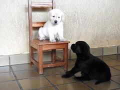 Preta e Branca - Cadeirinha (sileneandrade10) Tags: sileneandrade pb pretaebranca preta branca cachorro dog nikon nikoncoolpixp900